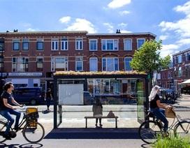Hà Lan phủ xanh mái nhà chờ xe buýt cho loài ong trú ẩn