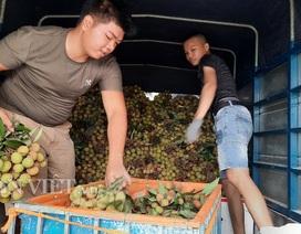 Quảng Ninh: Bội thu vải chín sớm, thương lái kéo về mua nườm nượp, nông dân thu tiền tỷ