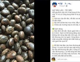 """Sự thật về hạt đậu Lào có giá """"cắt cổ"""" vẫn được nhiều người lùng mua"""