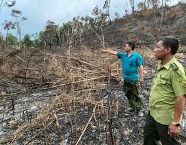 Truy tìm đối tượng tàn phá hơn 3,5ha rừng