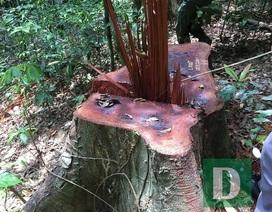 Lập đoàn liên ngành kiểm tra vụ phá rừng Trường Sơn