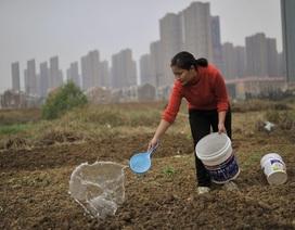 Cải cách ruộng đất ở Trung Quốc sẽ mở ra chu kỳ tăng trưởng kinh tế mới?