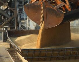 Trung Quốc đánh thuế 80% với lúa mạch Australia giữa căng thẳng Covid-19