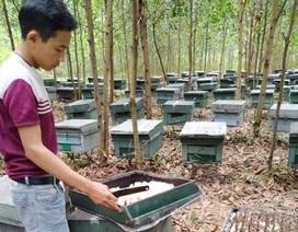 Hơn 200 tổ ong bất ngờ chết đồng loạt