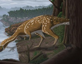 Phát hiện hóa thạch khủng long cực hiếm ở Úc