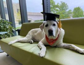 Chú chó 8 tuổi được trao bằng tiến sỹ tại Mỹ