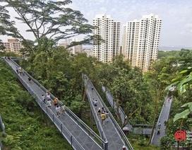 """Singapore """"làm nhà trong rừng"""", người dân ra đường như vào công viên"""