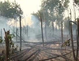 Cháy lớn suốt 4 giờ thiêu rụi 15 ha rừng