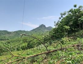 Bị phạt 10 triệu đồng vì cưa cây làm đứt đường dây điện