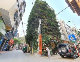 Những nhà Việt phủ kín cây xanh khiến báo Tây cũng phải trầm trồ thích thú