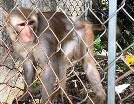 Bàn giao cá thể khỉ theo di nguyện của người quá cố