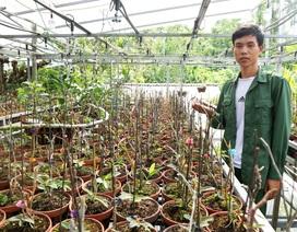 Ngỡ ngàng với vườn lan rừng khủng của chàng trai 9x xứ Quảng