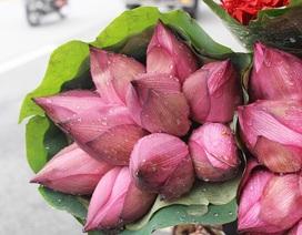 Hà Nội: Hoa sen xuống phố, thơm ngát cả vùng trời!