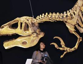 """Tìm thấy hóa thạch cực hiếm của """"siêu khủng long"""" khổng lồ"""