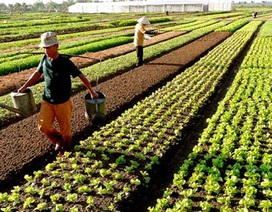 Chính phủ miễn thêm 7.500 tỷ đồng thuế sử dụng đất nông nghiệp/năm