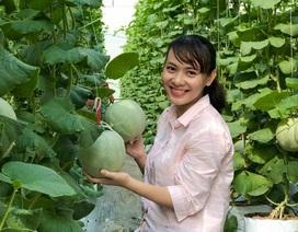 Thạc sĩ nghỉ việc ở cơ quan nhà nước về dọn vườn trồng dưa lưới sạch
