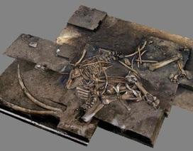 Phát hiện bộ xương voi cổ đại 300.000 năm tuổi ở Đức