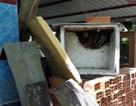"""""""Dụ"""" ong làm tổ trong thùng xốp, ở hốc cây dừa, thu mật ngon, bán đắt tiền"""