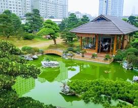 Tùng La Hán phong cách vườn Nhật đang thịnh hành