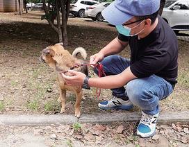 Cảm động chú chó đợi chủ đã qua đời tại bệnh viện ròng rã 3 tháng