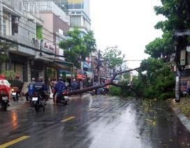 Cây đổ, đường ngập trong cơn mưa chiều cuối tuần