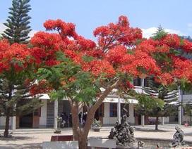 Tâm sự của cây xanh trong trường học