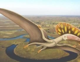 Phát hiện hoá thạch của loài Dực long chưa từng được biết đến tại Anh