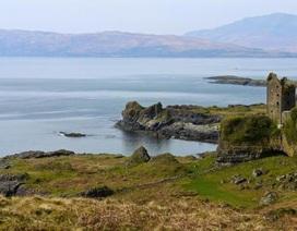 Phát hiện con bọ già nhất thế giới trên một hòn đảo của Scotland