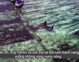 Khám phá cách trồng và thu hoạch loại tảo trị ung thư dưới đáy biển của người Nhật