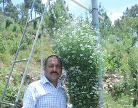 Kỷ lục thế giới: Trồng cây rau mùi cao hơn đầu người