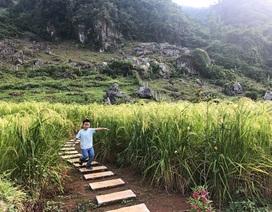 Cặp vợ chồng Hà Nội dành 4 năm cải tạo mảnh đất hoang và cái kết bất ngờ