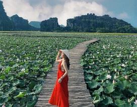 Con đường gỗ giữa hồ sen ở Hang Múa lại gây sốt
