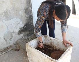 Bán giun quế trên Facebook, chị nông dân kiếm trăm triệu đồng