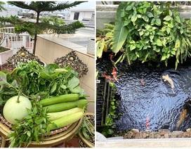 Mẹ đảm Hải Phòng trồng rau, nuôi cá trên sân thượng biệt thự triệu USD