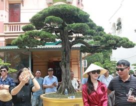 Choáng với cây cảnh hơn 300 tuổi của đại gia Phú Thọ, có người trả 23 tỷ đồng vẫn không bán