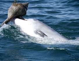 Tiết lộ mới về hành vi tìm kiếm thức ăn của cá heo