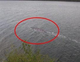 Tranh cãi về hình ảnh mới nhất được cho là quái vật hồ Loch Ness