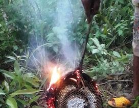 Hai anh em bị ong đốt, 1 người tử vong