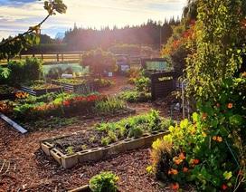 """Vườn rau trái trĩu trịt """"vạn người mê"""" của bà mẹ một con ở New Zealand"""