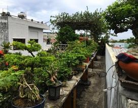 Vườn bonsai ngược trăm triệu đồng trên sân thượng nhà phố ở Quảng Nam