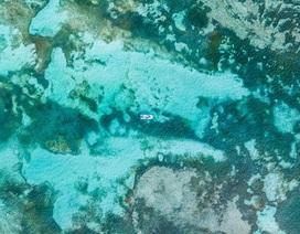 4 loài sinh vật đơn bào mới được phát hiện ở nơi sâu nhất Thái Bình Dương