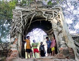"""Độc đáo cây đa """"bảo vệ"""" cổng phủ trăm năm tuổi"""