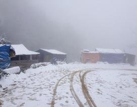 2 người thiệt mạng, gần 550 con gia súc chết trong đợt lạnh kỉ lục