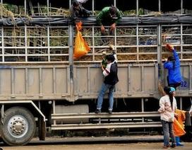 Công khai ăn cắp dưa trên các xe hàng ùn ứ ở Lạng Sơn