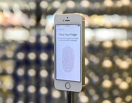 Apple đang sản xuất iPhone 6 màn hình 5,5 inch, thiết kế cong