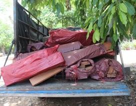 Bắt xe khách chở gỗ, thú rừng không rõ nguồn gốc