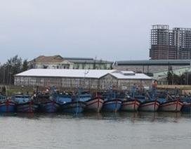 Cứu tàu cá cùng 9 ngư dân trôi dạt trên biển