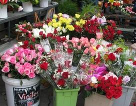 """Hoa hồng """"hiu hắt"""" vì giá quá cao"""