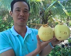 Bỏ việc gần chục triệu mỗi tháng, chàng trai về quê trồng dừa dáng lạ
