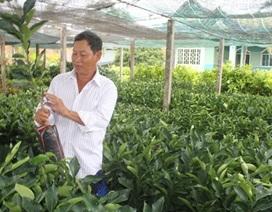 Hạn, mặn khiến giá cây giống tăng đột biến